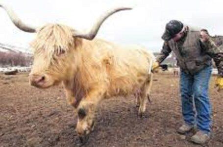 """Polis, está siendo acusado de """"traicionar a los ganaderos"""""""